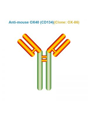 Anti-mouse OX40 (CD134)
