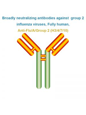Broadly neutralizing antibodies against  group 1 influenza viruses, Fully human, Anti-Flu/A/Group 2 (H3/4/7/10)