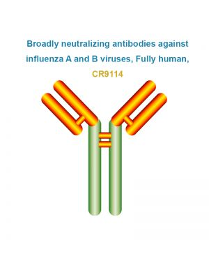 Broadly neutralizing antibodies against influenza A and B viruses, Fully human, CR9114