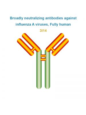 Broadly neutralizing antibodies against influenza A viruses, Fully human, 3I14