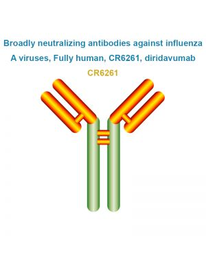 Broadly neutralizing antibodies against influenza A viruses, Fully human, CR6261, diridavumab
