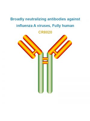 Broadly neutralizing antibodies against influenza A viruses, Fully human, CR8020