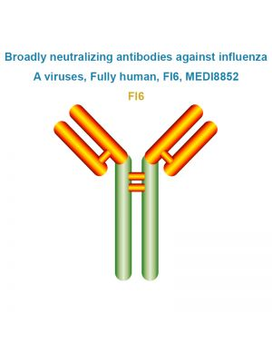 Broadly neutralizing antibodies against influenza A viruses, Fully human, FI6, MEDI8852